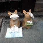 insolites du Japon - Lapins malades